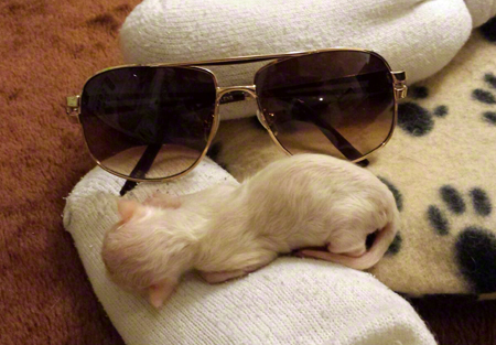 Piglet with Glasses