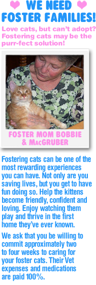 We Need Foster Families!